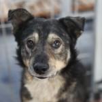 Viceprimarul Daniel Cîrjan propune o strategie pentru adopţia de câini în Drobeta Turnu Severin