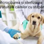 Liberalii severineni propun microciparea și sterilizarea câinilor cu stăpân din Drobeta Turnu Severin