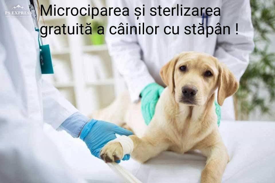Caini_microcipare