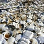 Liberalii severineni vor ca din 2020 să se interzică utilizarea farfuriilor, paharelor și tacâmurilor din plastic la evenimentele organizate pe domeniul public în Drobeta Turnu Severin